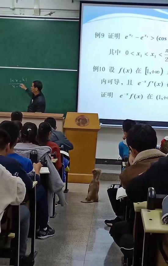 """华中科技大学""""西十二学霸狗"""""""