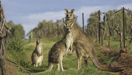 移民到澳洲很好 但你可能不得不住在郊区