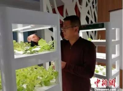 塑料瓶中种菜: