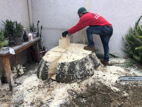 砍树工人正在砍掉一颗树。(美国《世界日报》/张宏 摄)