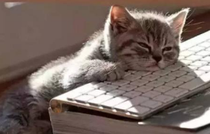 此刻坐在教室的你是不是特别怀念寒假在家的时光?怀念陷在沙发里的你……