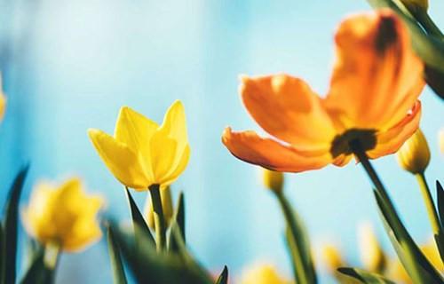 双语:给你介绍15个春韵十足的英语单词