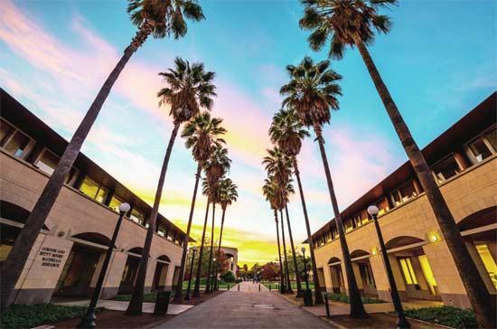 2017年11月19日,美国旧金山,斯坦福大学校园内景色。图片来源CFP