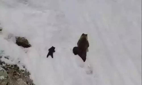 """励志的熊孩子:""""向上看 别放弃!"""""""