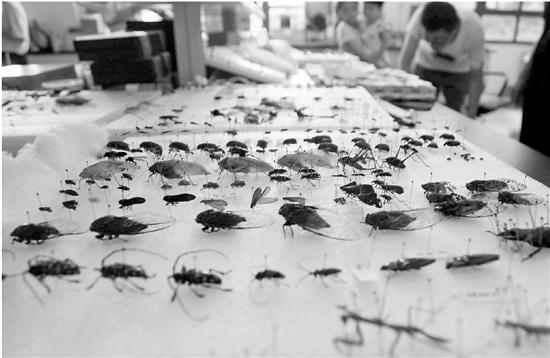 学生们制作的昆虫标本