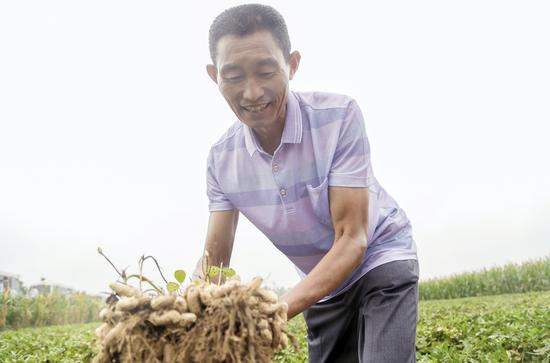 产地农户展示新鲜花生原料