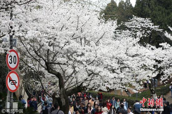 武汉大学迎赏樱高峰