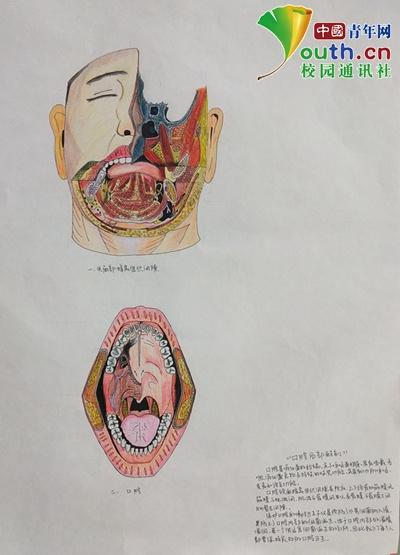 图为大学生手绘的人体主要部位和器官。湖北医药学院学通社供图