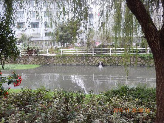 小学生写信反映水污染 委书记批示:立即调查核实