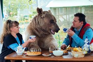 晨读故事:俄夫妇养23岁熊宝宝 一起看电视吃饭