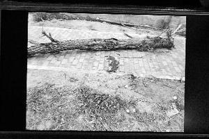 男童举起枯树玩被砸死 三名玩伴被判担责