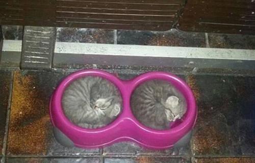 猫咪睡在食盆里