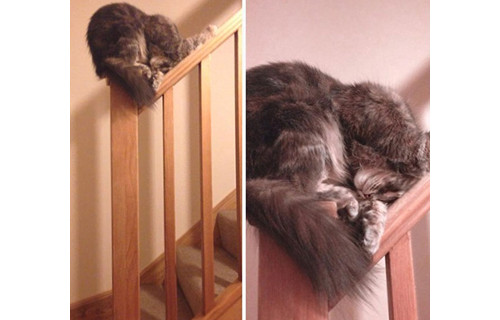 楼梯扶手也能睡