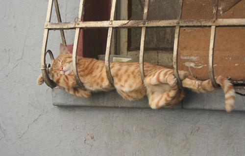 猫咪睡在栏杆上