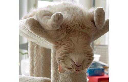 下着腰睡着了
