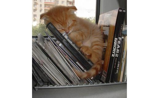 睡在DVD旁