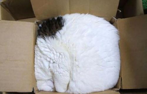猫咪挤在纸箱里