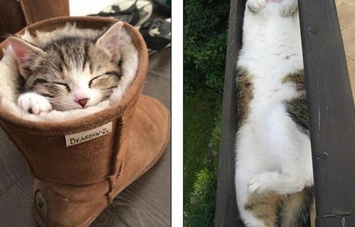 猫咪睡在鞋子里