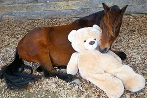 被遗弃的小马有个泰迪熊妈妈 紧紧相偎超暖心