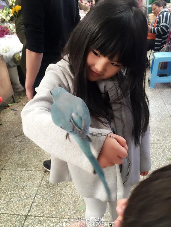 王诗龄逛花鸟市场