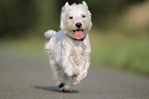 趣学单词:与run有关的习语和短语