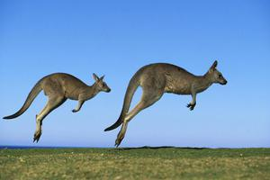 澳大利亚移民部任性撤签证?被遣返者2年增10倍