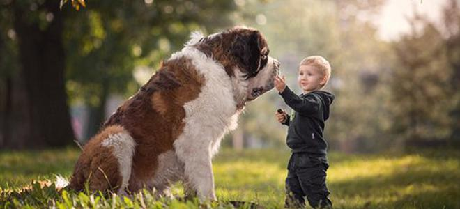 摄影师镜头中大狗狗和小朋友的纯友谊