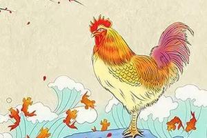鸡年的英文为什么不是Year of the Chicken?