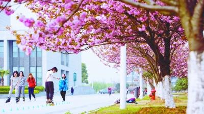"""中国药科大学校园内有6000多株樱花,""""花样校园""""美不胜收。本报通讯员 姜晨 鲍卫东摄"""