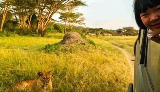 和狮子近距离接触