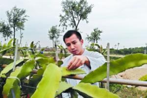 高考状元珠海种地7年记 创业经营300亩地农场