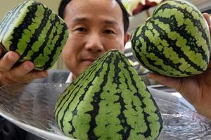 600人民币一个西瓜 在日本当吃瓜群众不容易