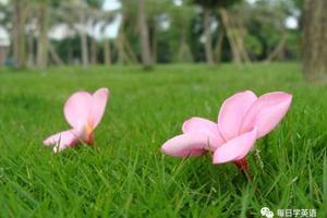 双语美文:脚下的草才是最绿的(图)