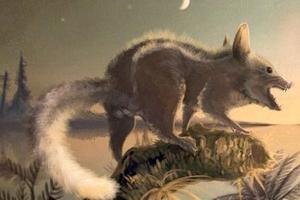 双语:考古新发现人类的祖先是老鼠