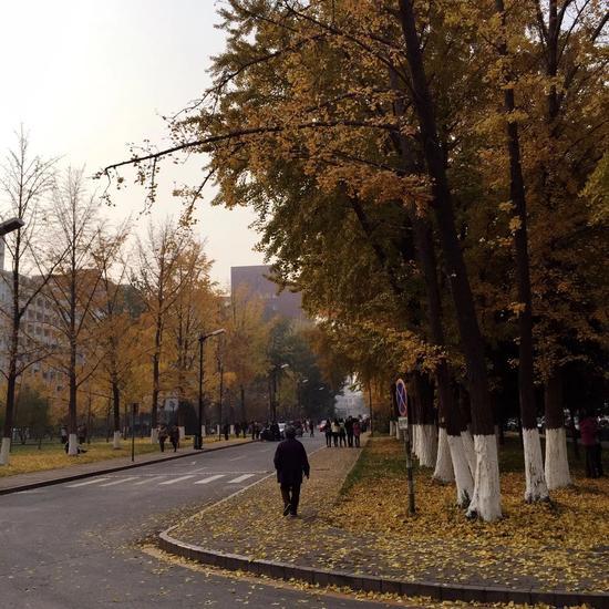 满庭叶簇簇,通往明德广场的路又一次被银杏铺就一地秋日暖黄,老人步履蹒跚,秋阳余辉悠悠,一派岁月静好。中国人民大学魏逸宸/摄
