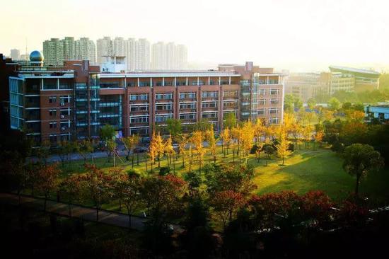 """""""秋色无远近"""",弹指一挥间,浙江师范大学的银杏林渐渐染上秋色。落叶铺就一地金黄,脚踩上去,簌簌作响。汤子楠/摄"""