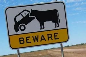 澳新州试行电子驾照 掏出手机即可查验信息