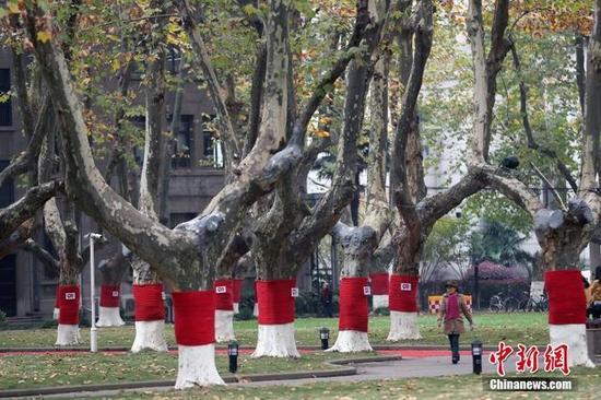 """南京东南大学校园内的梧桐树""""穿""""上鲜红的""""毛衣"""","""