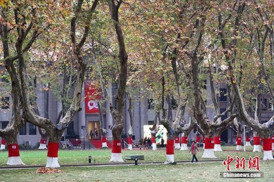 """南京东南大学校园内的梧桐树""""穿""""上鲜红的""""毛衣"""""""