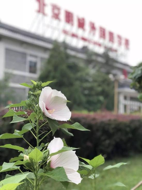 图片来自北京明诚外国语学校官方微信公众号