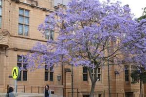 未来在澳上大学成本或激增 预计10年内涨2成