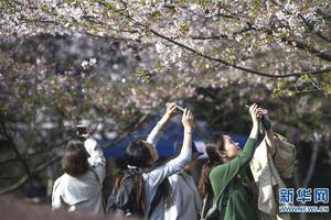 武汉大学发布2018招生政策 将实行三学期制
