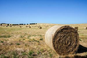 澳维州西部人口严重流失 地区优势仍留不住人才