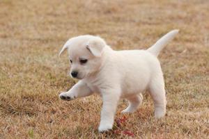双语美文:一位狗狗主人的表白(图)