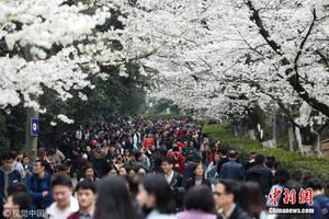 组图:武汉大学迎赏樱高峰 游客扎堆校园内