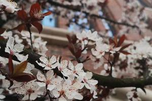 春分时节 带你领略全国27所高校的满园春(图)