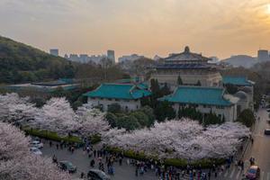 武汉大学的樱花账单:大学如何走出被景点化怪圈