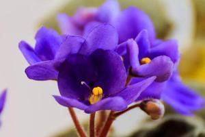 10种鲜花的英文名含义 你最喜欢哪种花?