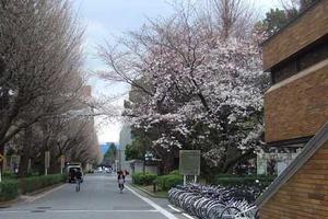 京都大学华人教授涉论文造假 校方已要求其撤下论文