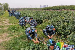"""天津大学开荒10亩""""责任田""""学生自己种地收菜分粮"""